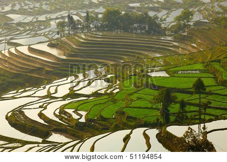 Rice terraces. Yunnan, China