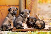 stock photo of stray dog  - Homeless dogs stand together - JPG