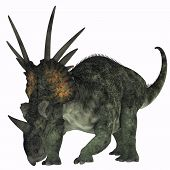 picture of herbivore  - Styracosaurus was a herbivorous ceratopsian dinosaur from the Late Cretaceous Period - JPG