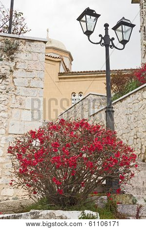 Flowers And Street Lamp