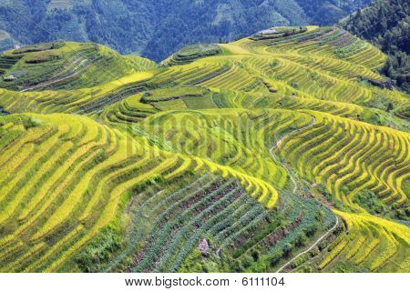 Longshen Rice Fields
