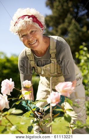 Elderly Woman Gardening In Backyard