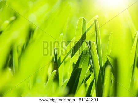 Fresh green grass background, spring nature with bright yellow sun light, abstract natural backdrop, earth and ecology, sunny day, soft focus, environment protect concept