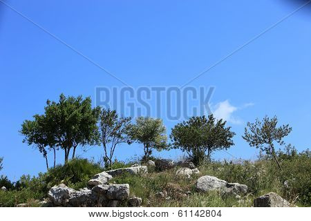 Rocky Outcrop With Trees On A Hilltop
