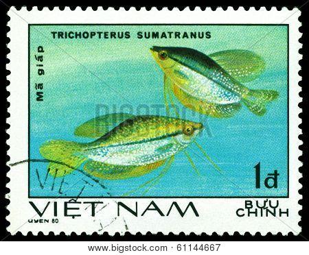 Vintage  Postage Stamp. Trihopterus Sumatranus.