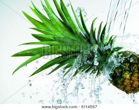 Splash Pine Apple