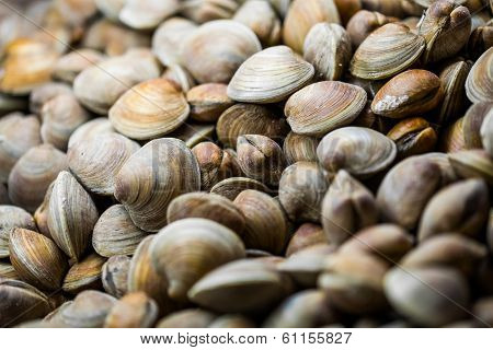 Clams In The Fish Counter Of A Restaurant