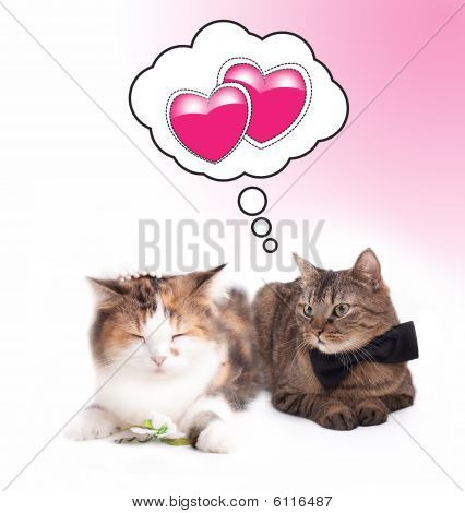 married cat couple