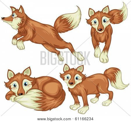 Illustration of the four foxes on a white background