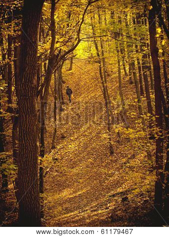 Man Walking  In Forest In Autumn