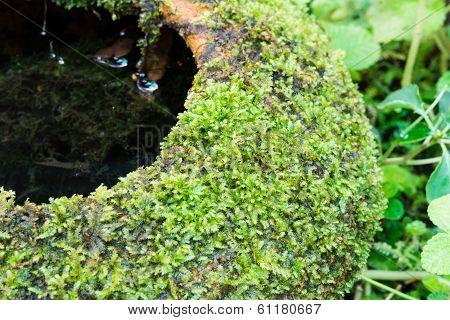 Green Moss Covered Jar
