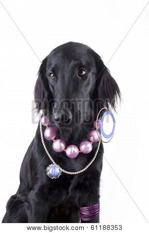 Dog With Jewelry