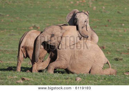 Baby African Elephant Fun