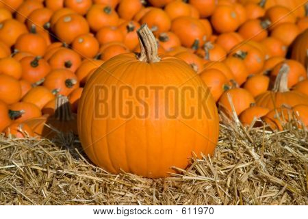 Medium Pumpkin On Hay