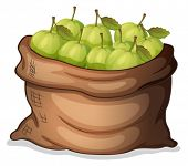 Illustration of a sack of guavas on a white background