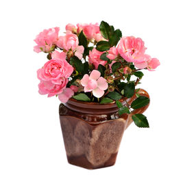 stock photo of pink rose  - bunch of small pink roses in ceramic pot - JPG