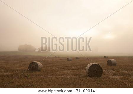 Field In Morning Mist