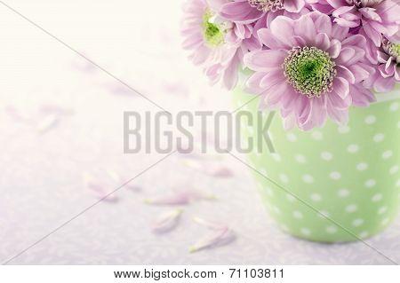 Pink Chrysanthemum Flowers2