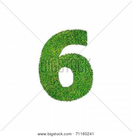 A Grass Six 6 Isolated On A White Background