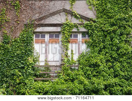 Abandoned House Invaded By Nature
