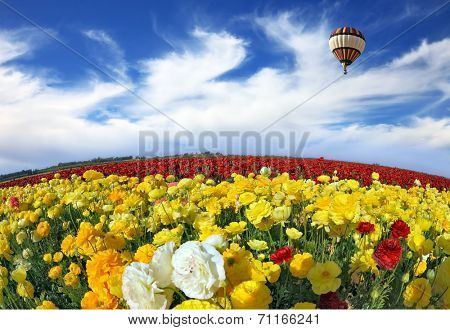 Wonderful spring mood, nice big balloon flies over the field. The huge field of red and orange buttercups. The picture was taken Fisheye lens