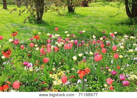 Multicolored Springlike Flowerbed In The Park