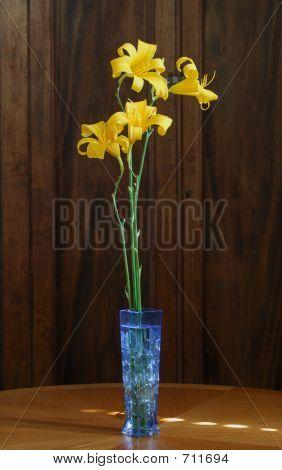 Interior Daylilies