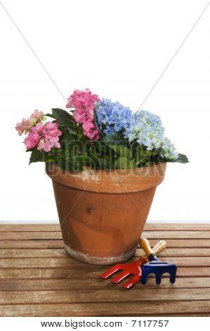 Gardening With Hydrangea