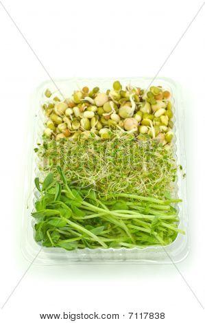 Brotes orgánicos