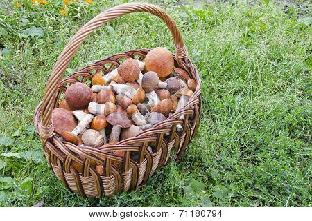 Basket With Mushrooms On The Grass