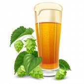 stock photo of malt  - Glass of beer and hops isolated on white background - JPG
