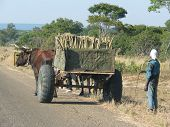 picture of ox wagon  - War machinery in post war Angola - JPG