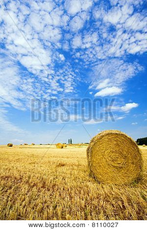 haybales on summer field