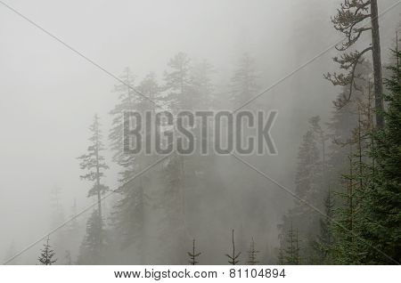 Mount Rainier Fog