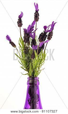 French Lavender Stems In Vase