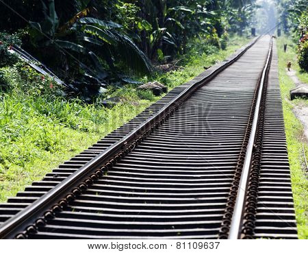 Railway tracks in jungle