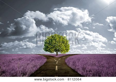Crossroad In Lavender Meadow