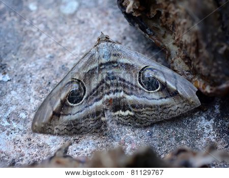Camouflage Of A Butterfly On The Ground
