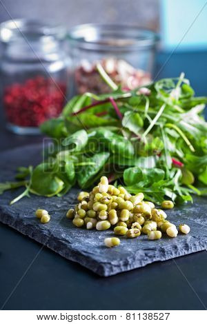 Mung bean sprouts on dark background