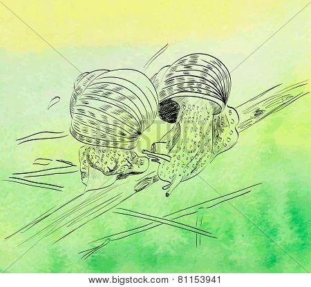 sketch of snail