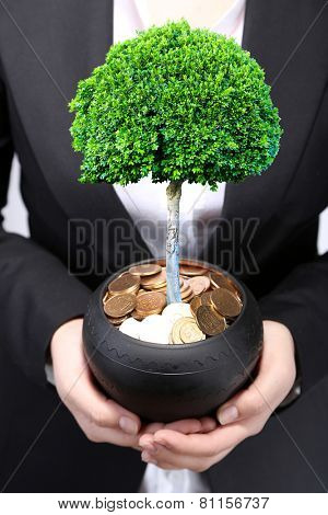 Green tree growing in ceramic pot full of coins, pot in hands