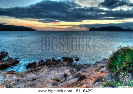 Seascape At Sunset In Winter With Grass And A Plant