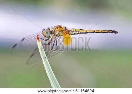 dragonfly is resting