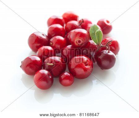 Cowberries Macro