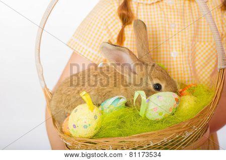 rabbit in  basket easter eggs