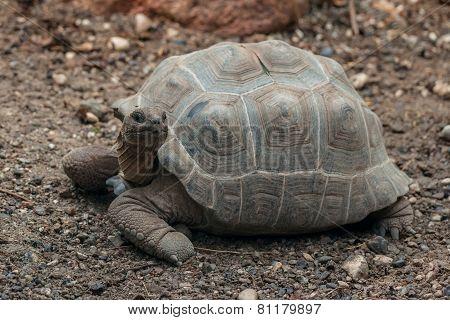 Turtle On Dry Land