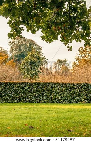 Hedge In A Park