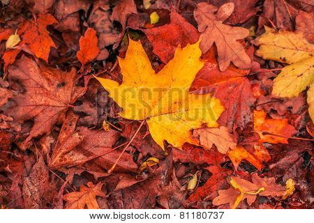 Autumn Leaves In Warm Colors
