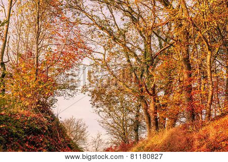 Autumn Leaves In In A Forest Scenery