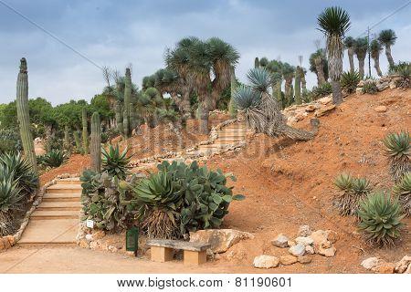 Staircase In Botanicactus Garden Mallorca
